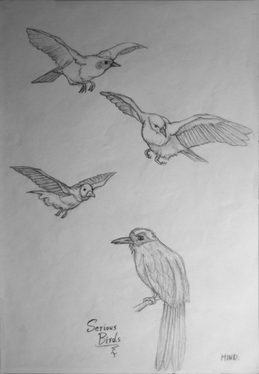 Serious Birds