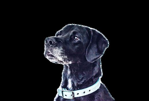Black Dog_edited_edited.png