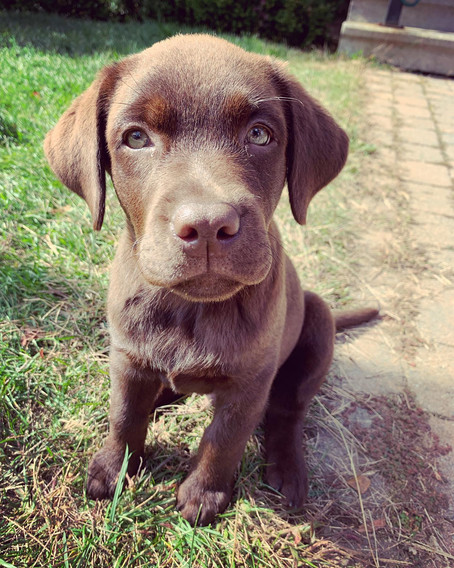 Our top, life changing puppy tips!