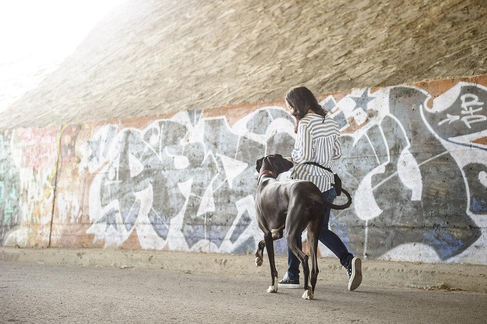 Great Dane - Dog Inspired