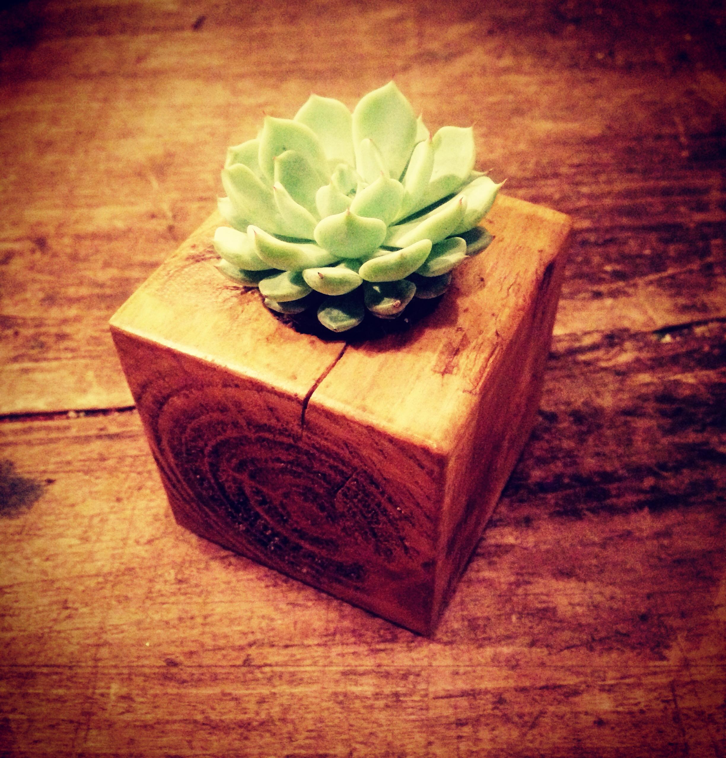 Un mini fleuri