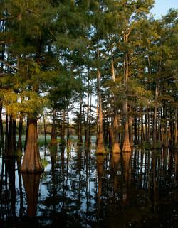 South Arkansas swamp land