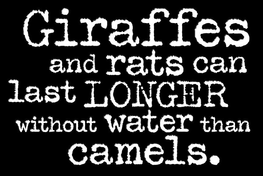 Giraffe Headline