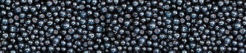 aronia_berries_wrap.png