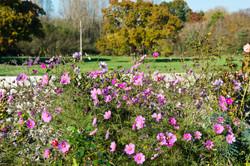 The-Flower-Garden
