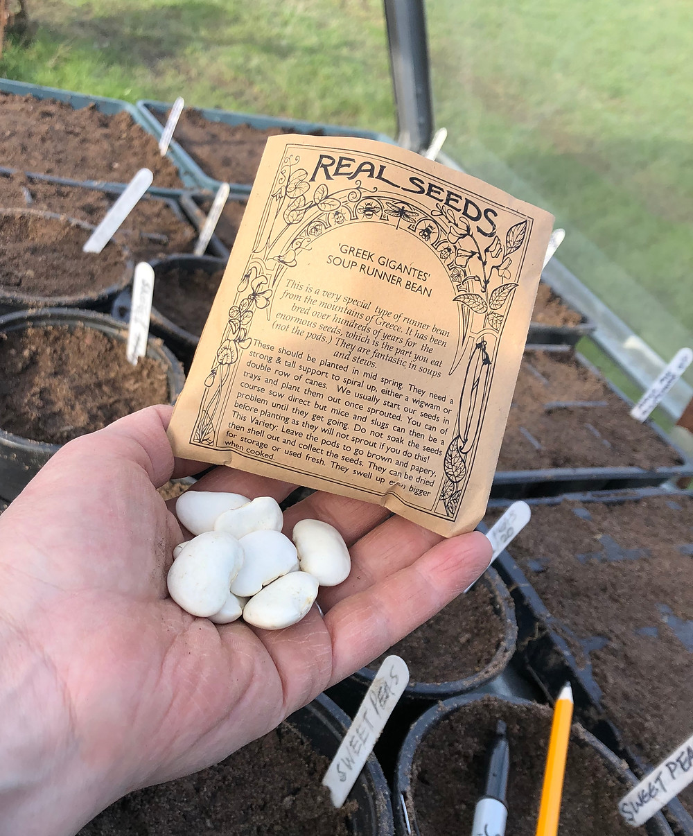 seeds, hand, greenhouse, outdoors, gardening
