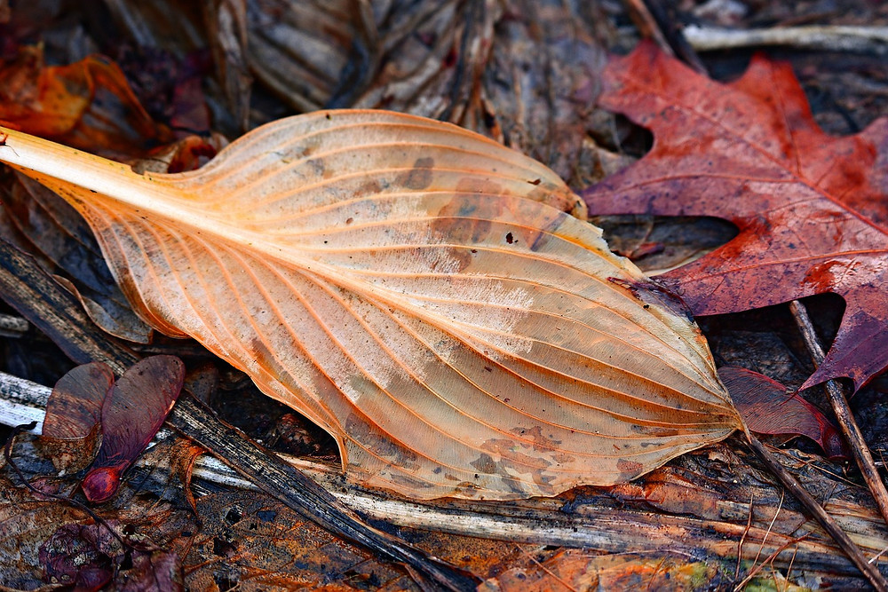 Damp autumn leaves, twigs and seeds lying on the ground