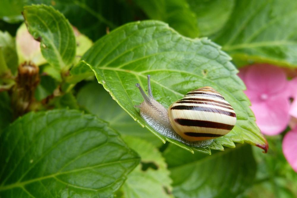 Snail on a leaf.