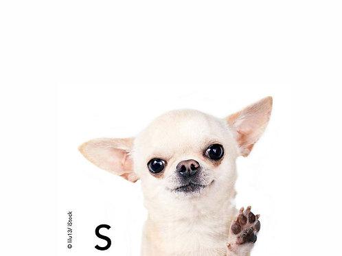 Collier de chien S / S Dog Collar
