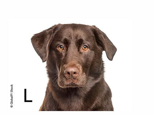 Collier de chien L / L Dog Collar