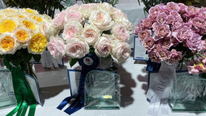 Garden Roses from Alexandra Farms Take Top Three Spots in Proflora Variety Contest
