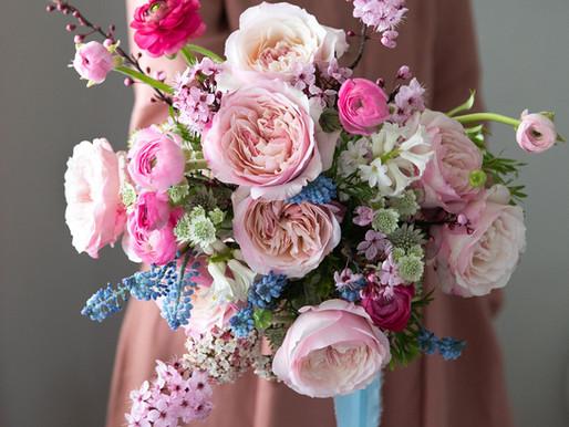 Meet Keira (Ausboxer), the perfect English garden rose