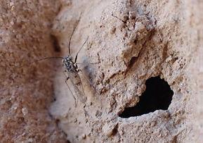 Entomo.jpg
