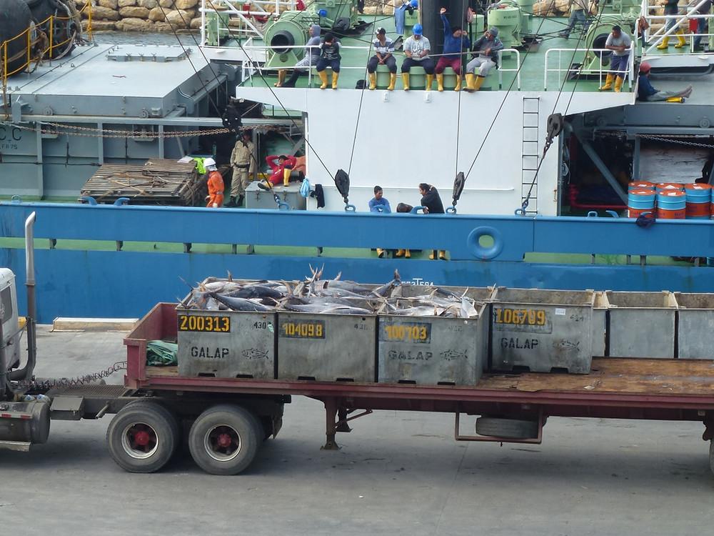 Manta Ecuador offloading tuna