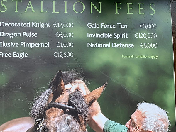 Stud fees by horses name