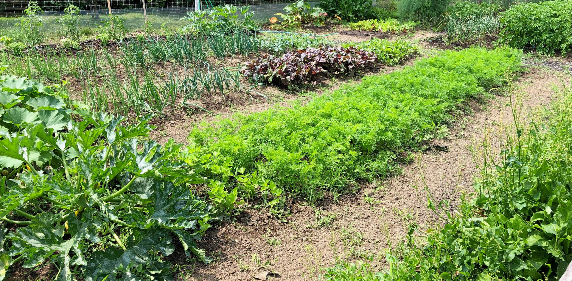 Beautiful large garden with featuring perennial herbs and vegatables