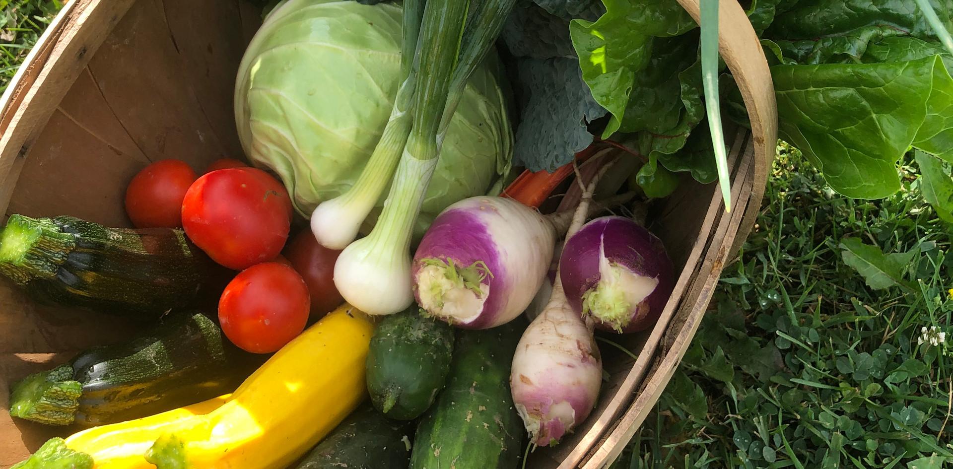 Mid Season Harvest