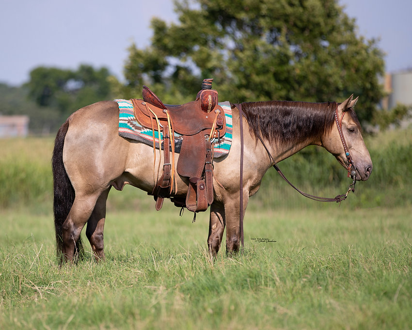 Comanche 1.jpg
