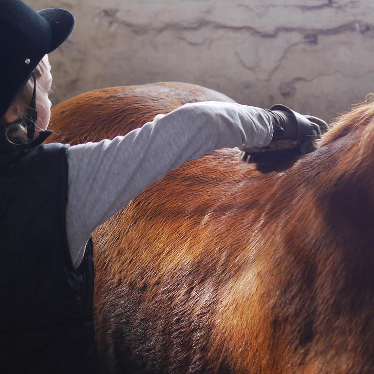 Pony Care morning