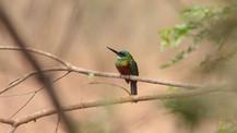 Observação de Aves em Roraima - 5 dias