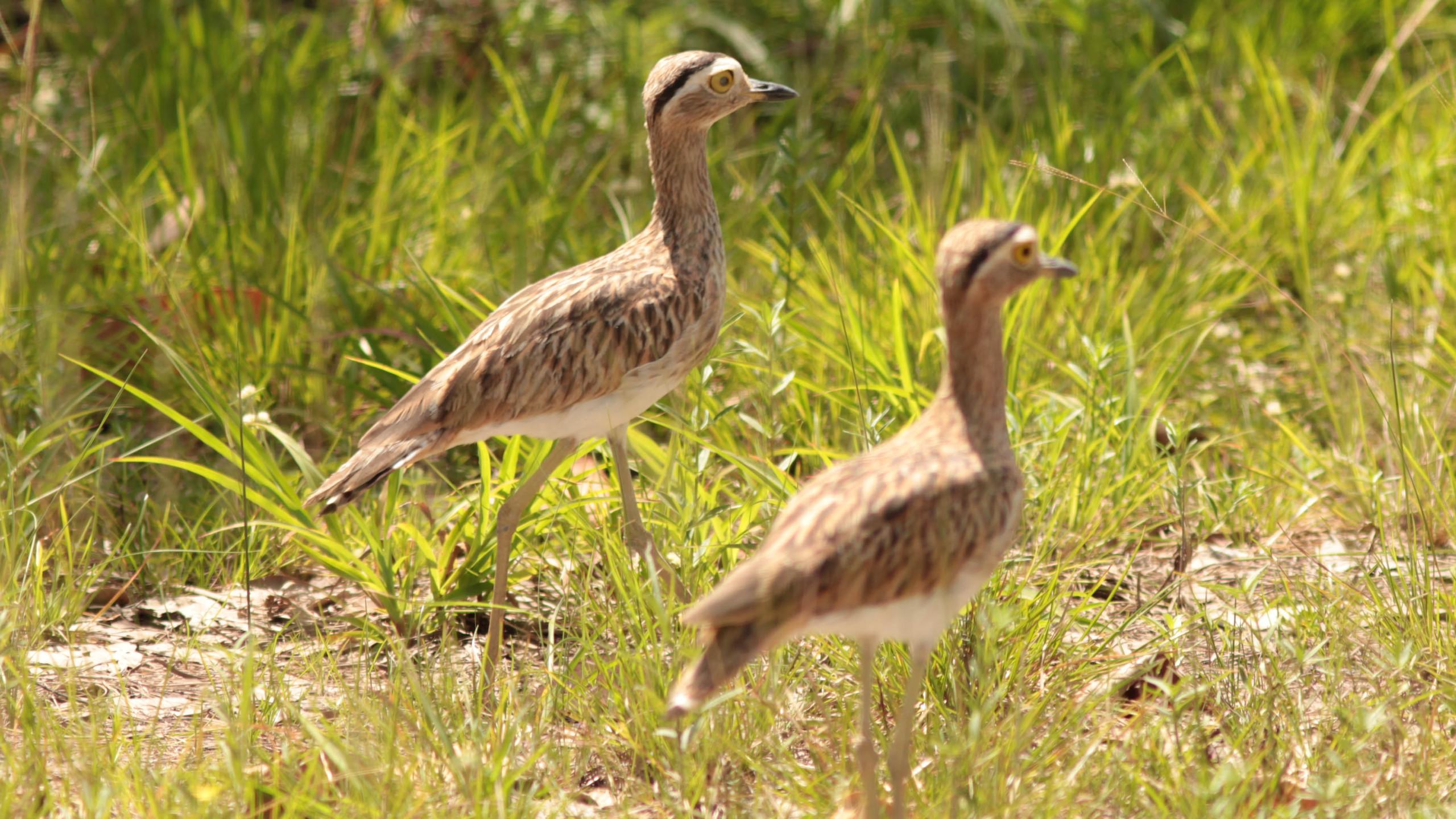 Observação de aves em Roraima