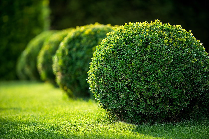 trimming-the-hedge-banner.jpg