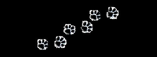 8f87ddc3d66da66d55cee704f351f680_paw-pri