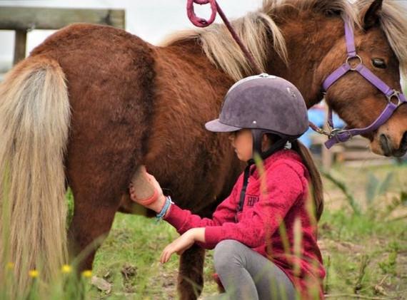 Soin chevaux.jpeg