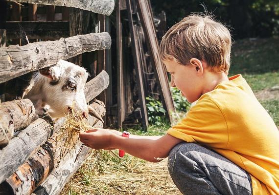 enfant à la ferme.jpg