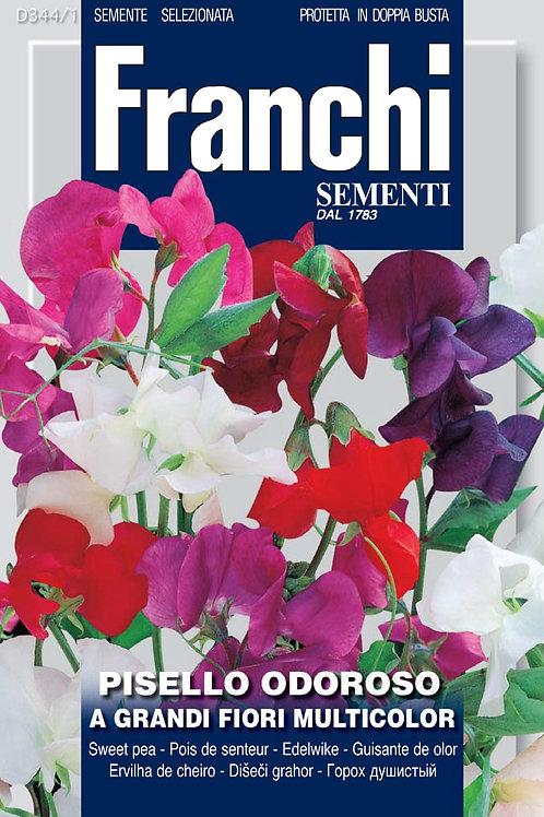 Franchi Flower Seeds