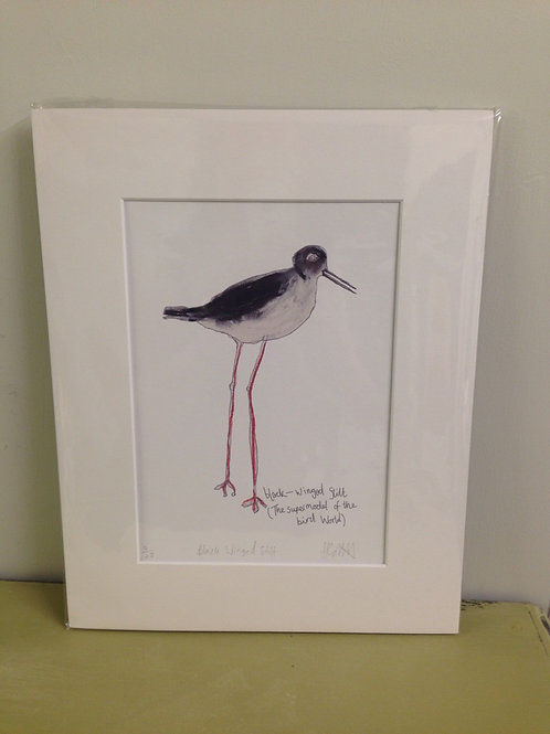 Black Winged Stilt Print