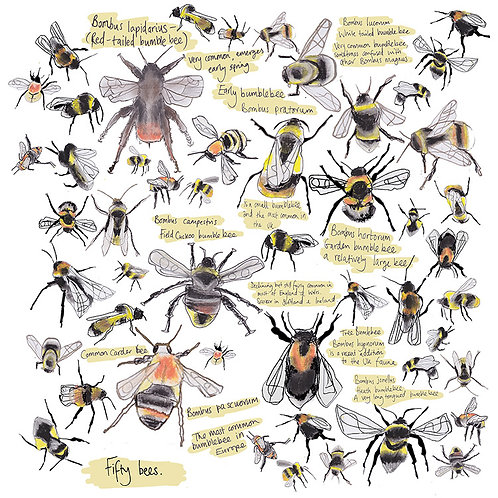 Fifty Bees Greetings Card