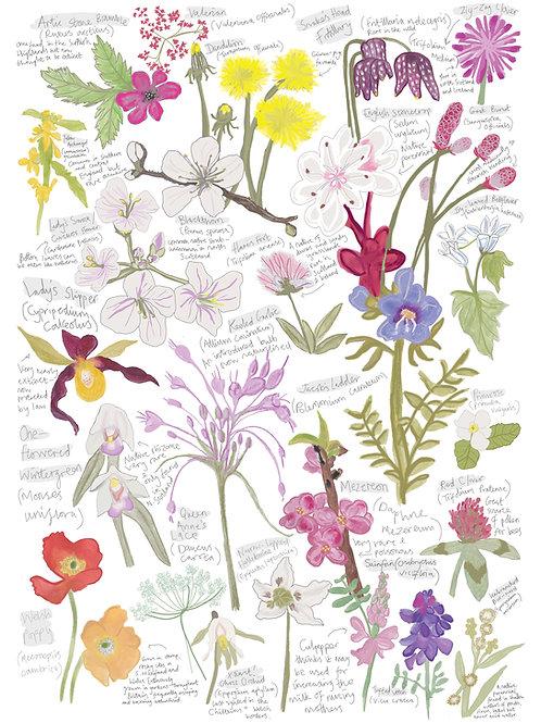 A-Z Wildflower Study Greetings Card