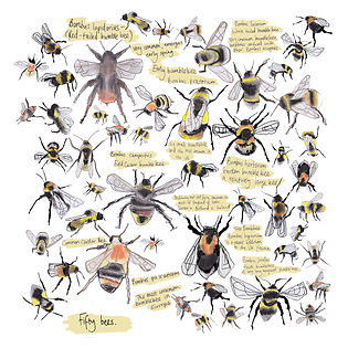 bee30x30cushion.jpg