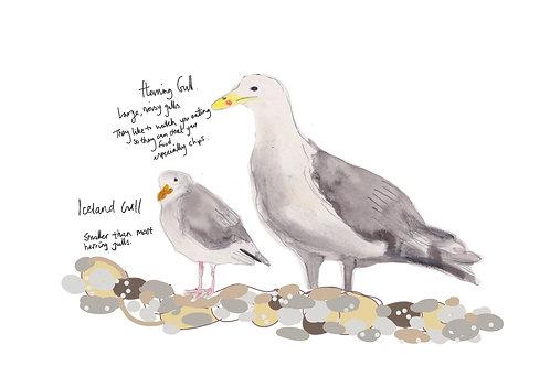 Gulls print