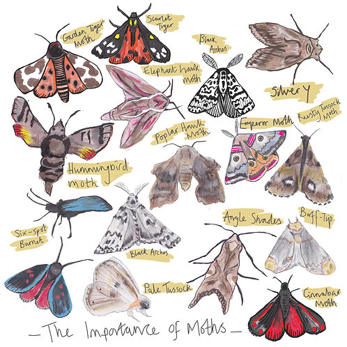 The Importance of Moths