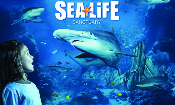 Automatic Door Servicing in the Sea Life Sanctuary