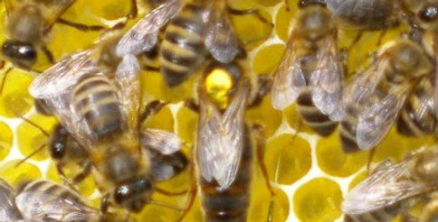 Own a Hive