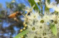 blog_bees.jpg