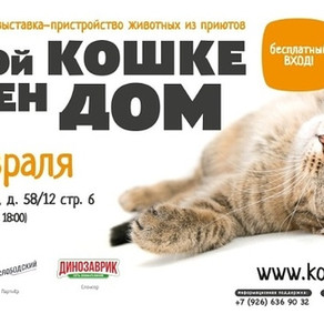 Одиннадцатая благотворительная выставка-пристройство «Каждой кошке нужен дом».