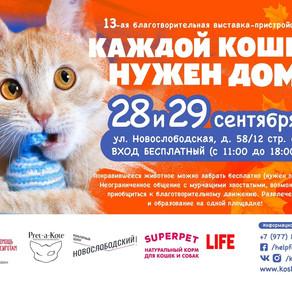 """13-я выставка-пристройство """"Каждой кошке нужен ном"""""""
