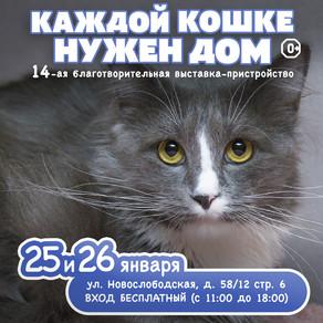 """14-я выставка-пристройство """"Каждой кошке нужен ном"""""""