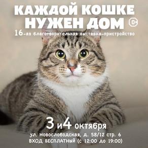 """16-я выставка-пристройство """"Каждой кошке нужен ном"""""""