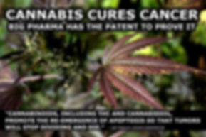 cannabis cures cancer, cannabis kills cancer, cancer killers, cancer killer, canncure, canncures, cannabinoids, alternative cancer treatment, alternative cancer treatments, medicine, alternative medicine, healing, healer, does cannabis heal cancer, cannabis oil, thc oil, sbd oil, hemp oil, how, how to heal cancer, how to cure cancer, cancer cure, cancer cures, cannabidoil, Free App, news, new, iwonderland, iwonderland app, truth, awakening, russell strand, knowledge, buy, shop, online shopping, shopping, store, amazon, lulu, kindle, bookstagram, discover, learn, how to, how to heal cancer, cancer, cancer cure, cures, medicine, natural medicine, natural cure, alternative medicine, alternative nutrition healing, reverse cancer naturally, health benefits, healthy benefits, cryptozoology, paypal, findings, find, book, books, library, read, new, reading, bookshelf, wonderland, how to make colloidal silver, bookbuzz, nanowrimo, ebook, ebooks, mswl, writetip, indie pub, self published, truth