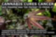 cannabis, cannabis cure, cannabis cures, cbd oil, hemp oil, cannabis oil, thc, cbd, how to, how to heal cancer, truth about, the truth about, wonderland store, wonderland shop, shop online, wonderland events, event, events, alice, alice in wonderland, through the looking glass, down the rabbit hole, follow the white rabbit, alices adventures, wonderland events, event, events, party, wedding, wonderland's weddings, booking, bookings, bargain, bargains, book, books , amazon, lulu, kpd, smashwords, buy, sell, store, online, online shopping, shop, shopping, online store, sale, sales, book shop, book store, online book, shop, online book store, wonderland by russell strand, Russell strand, iwonderland, I wonderland, wonderland, wonderland shop, wonderland store, goodreads, good read, new, read, reading, freado, pub it, kobo, book buzz, booksactually, booktastic, bookgasm, meditation, awaken,  awakening, spirit, spirituality, cryptozoology, knowledge, tatty journal, truth, russell strand,