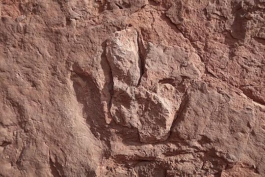 På Poison Spider Road ses Dinosaurus spor. Drivingusa.dk
