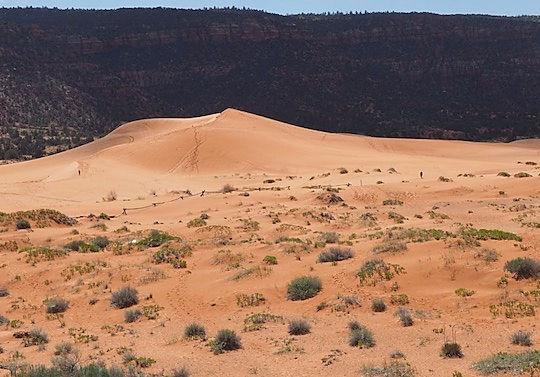 Sandklitter ved Coral Pink Sand Dunes