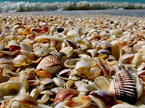 Sanibel Island, tæt på Fort Myers Beach