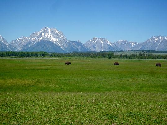 Grand Teton, Wyoming. Drivingusa.dk - Roadtrip i USA