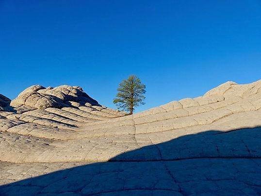 Lonesome Tree in White Pocket.jpeg